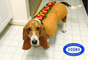 a photo of a dog wearing a hot dog costume